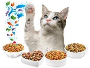 kedi beslenme