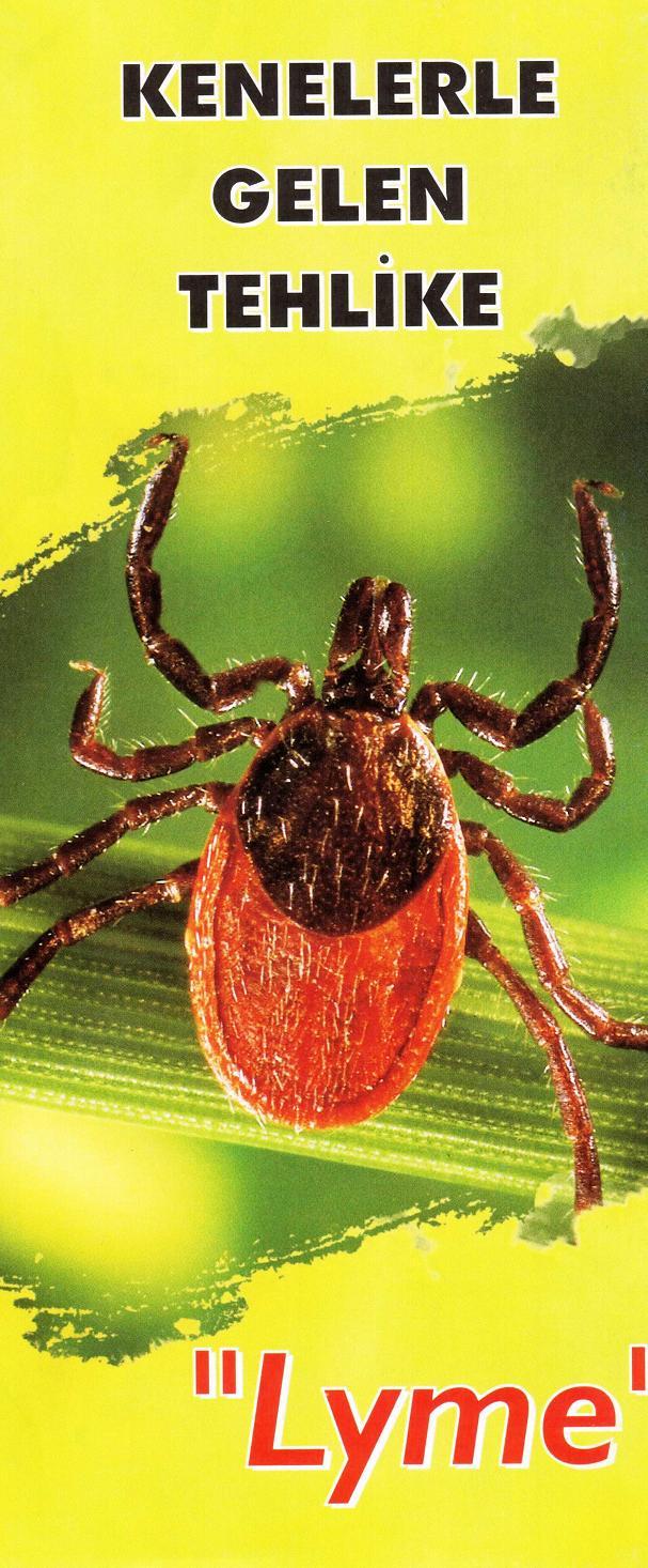 Lyme hastalığı tehlikeli ve sinsi